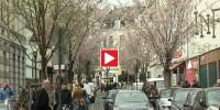 Kirschblütenfest Bonn